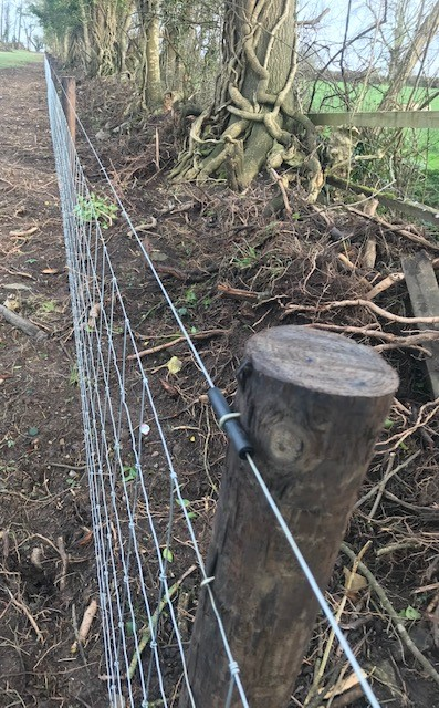 Sheepwire electric fence
