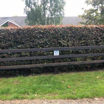Creosote-timber-rail