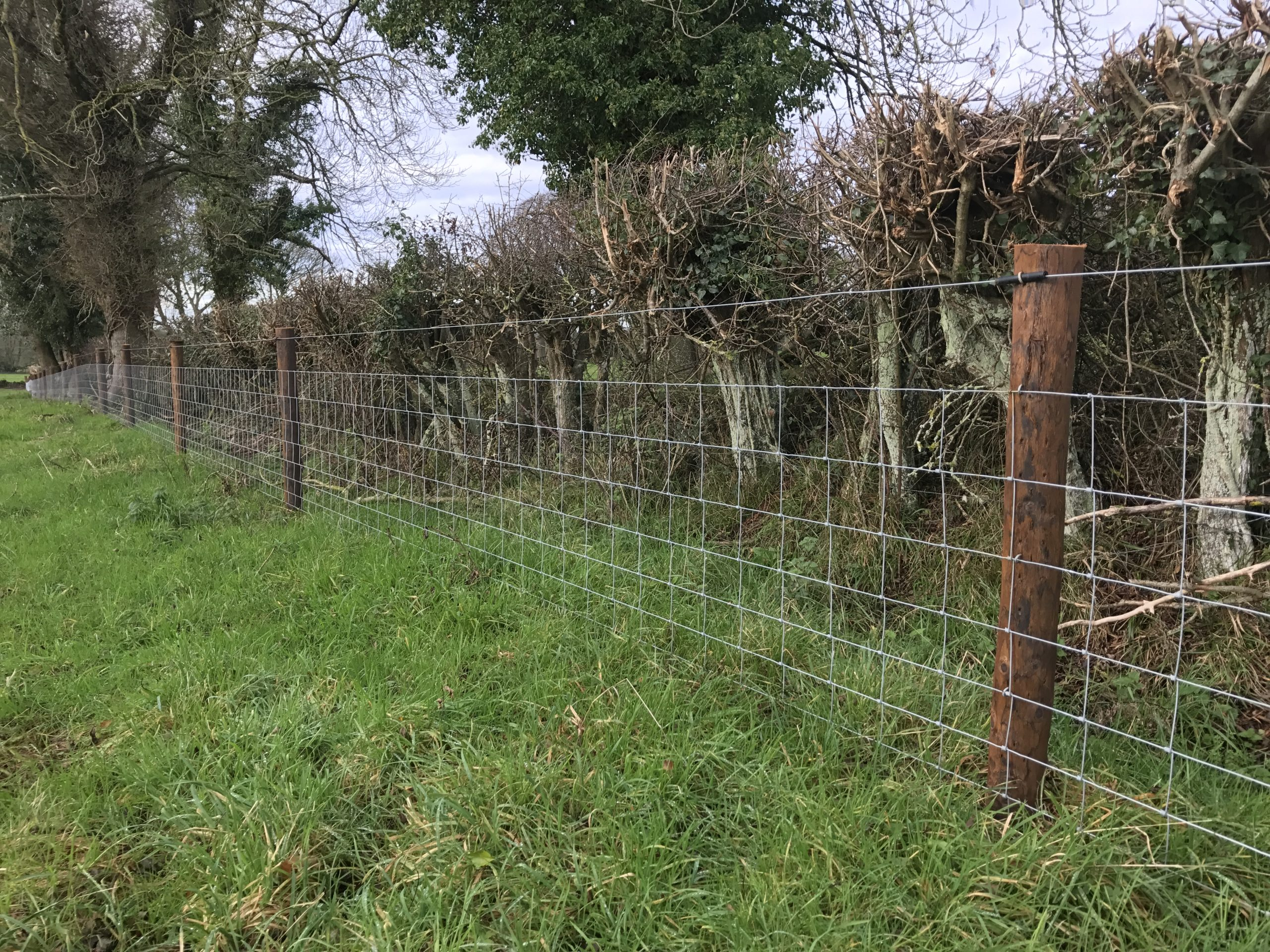 farm-sheep-fence
